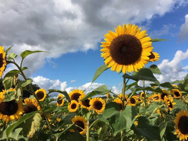 Сонячно: погода у Демидівці 2 вересня