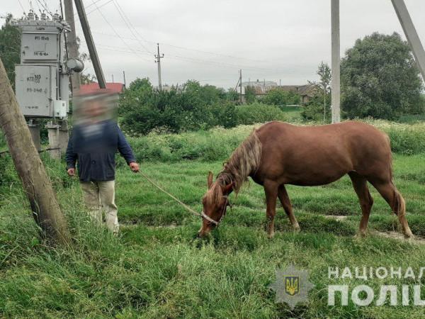 У селі Княгинине затримали крадія коней